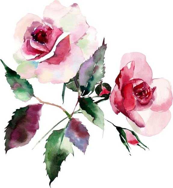 Watercolor floral herbal botanical pink red violet purple two roses Premium Vector