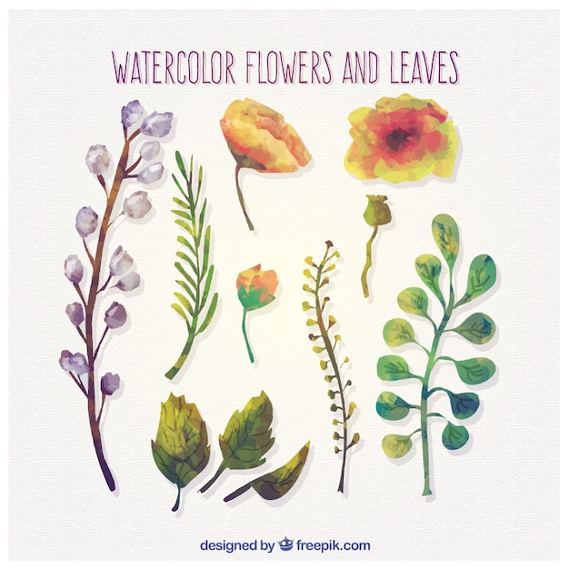 Watercolor flowers and leaves Free Vector