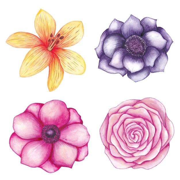 水彩花コレクション、バラ、モクレン、つぼみ、ユリ Premiumベクター