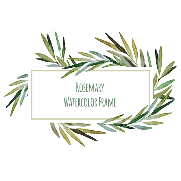 Watercolor frame with rosemary twigs Premium Vector