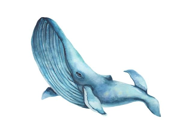Иллюстрация горбатого кита акварели нарисованная вручную - скачущ вверх. Premium векторы