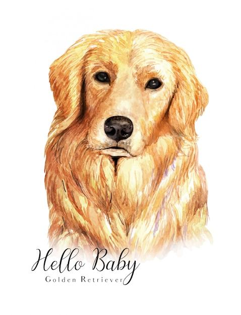 Watercolor hand-drawn portrait golden retriever dog Premium Vector
