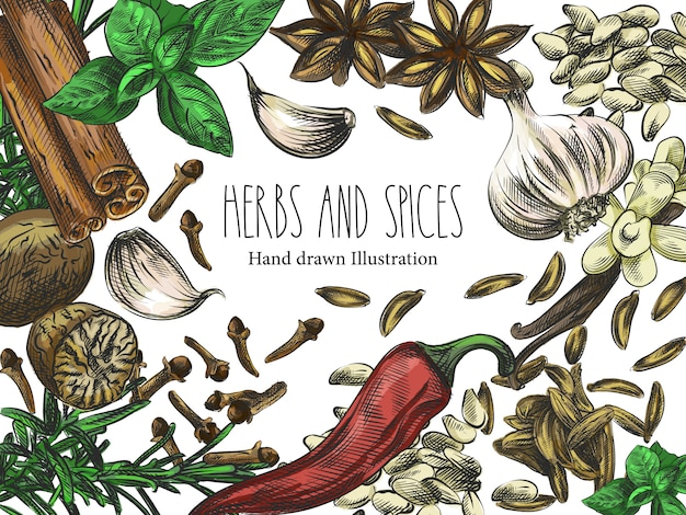 Watercolor hand-drawn sketch of herbs, spices and seeds. the set consists of sunflower seeds, garlic, cinnamon, badian, chili pepper, carnation, basil, rosemary, vanilla, cloves, sesame, cardamon Premium Vector