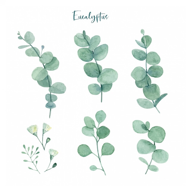 Watercolor hand painted green eucalyptus leaves with flower buds Premium Vector