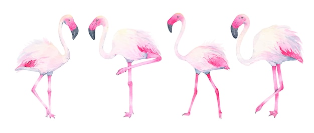 Watercolor hand painted tropical pink flamingo isolated on white Free Vector