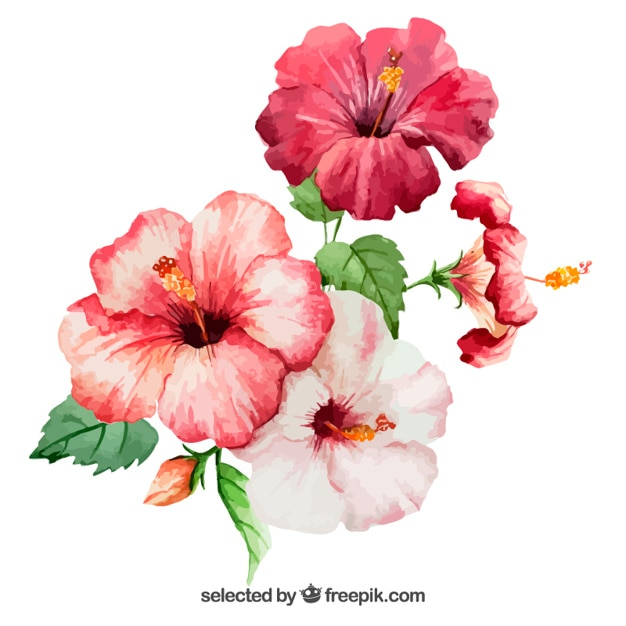 Watercolor hibiscus flowers Free Vector