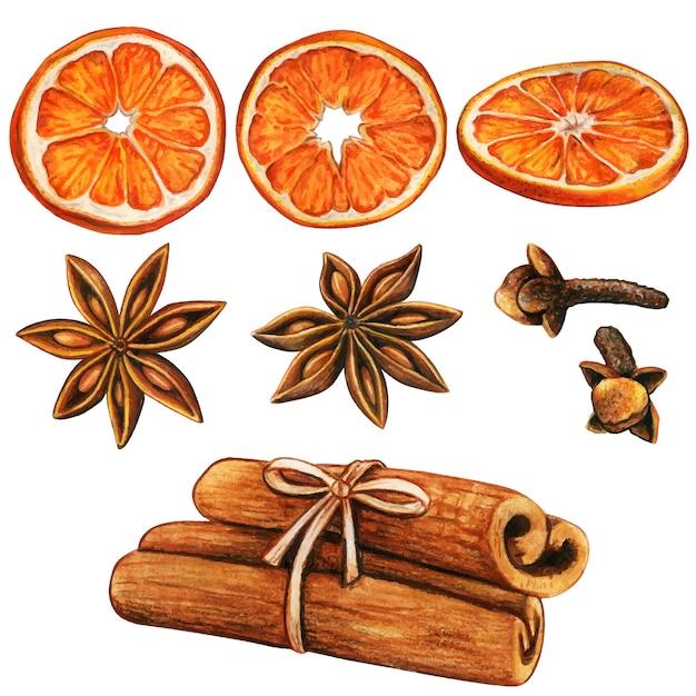 Акварель высококачественные зимние специи и дольки апельсина Premium векторы