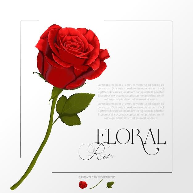 붉은 장미 꽃의 수채화 그림 프리미엄 벡터