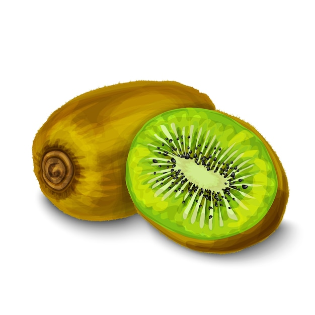 kiwi vectors, photos and psd files  free download, Beautiful flower