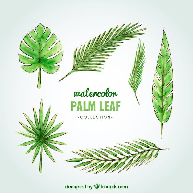 Watercolor palm tree leaf collection