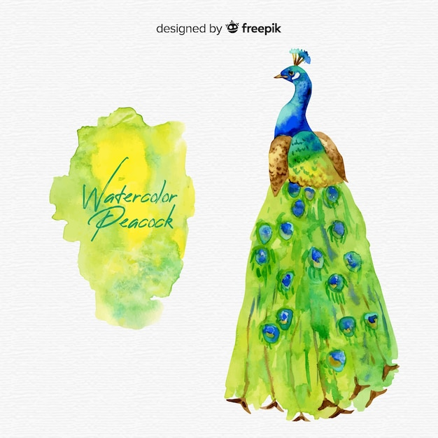 Watercolor peacock background Free Vector