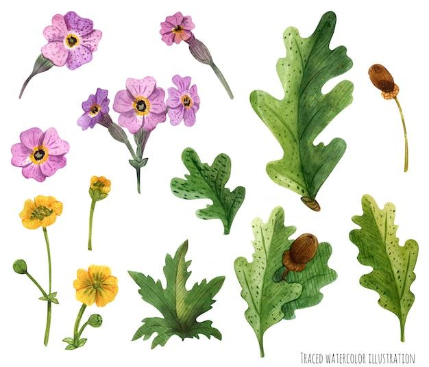 Watercolor plants of scotland Premium Vector