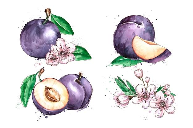 水彩梅の果実と花のイラスト Premiumベクター