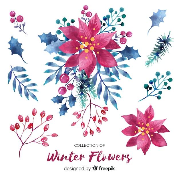 Watercolor poinsettia collection Free Vector