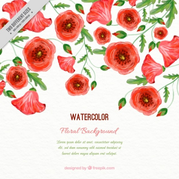 Watercolor poppies background with leaves Free Vector