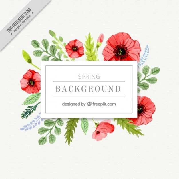 Watercolor poppies floral label Free Vector