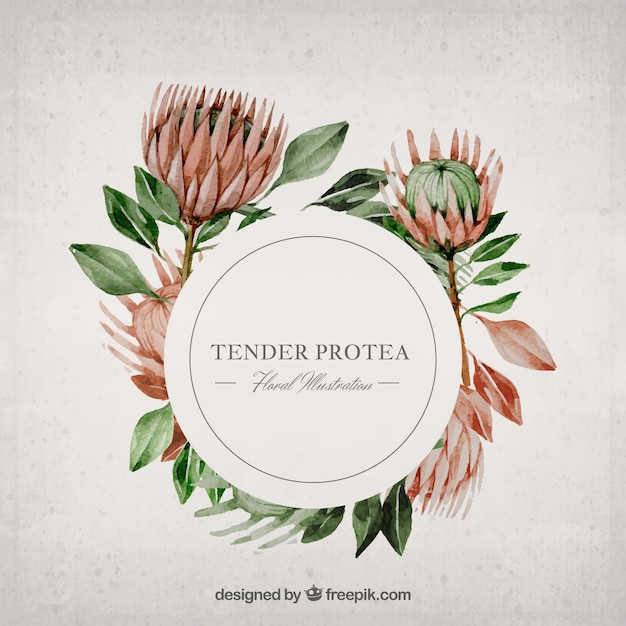 Watercolor Protea Illustration Free Vector
