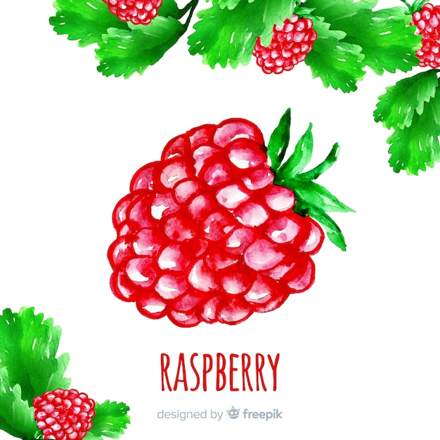 Watercolor raspberry Free Vector