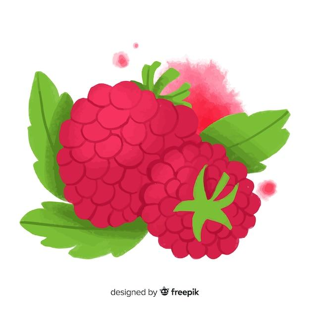 Watercolor raspberry Free Vector