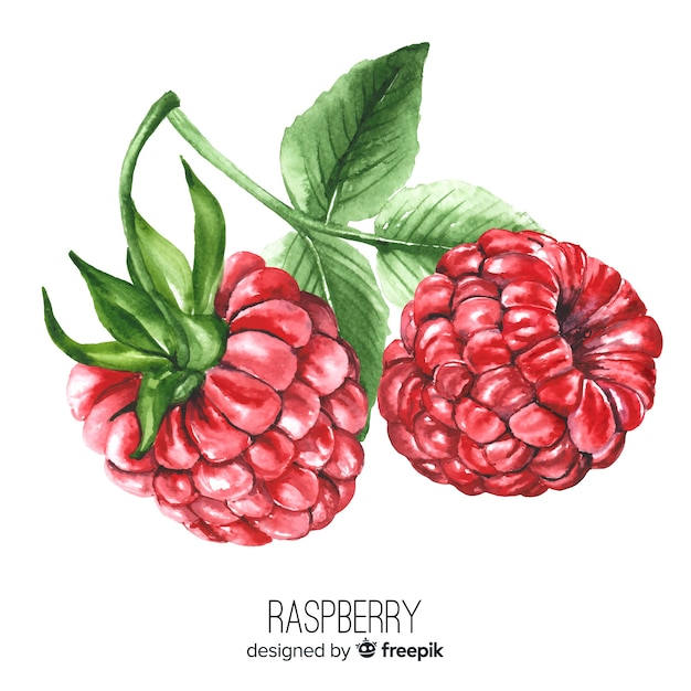 Watercolor realistic raspberry background Free Vector