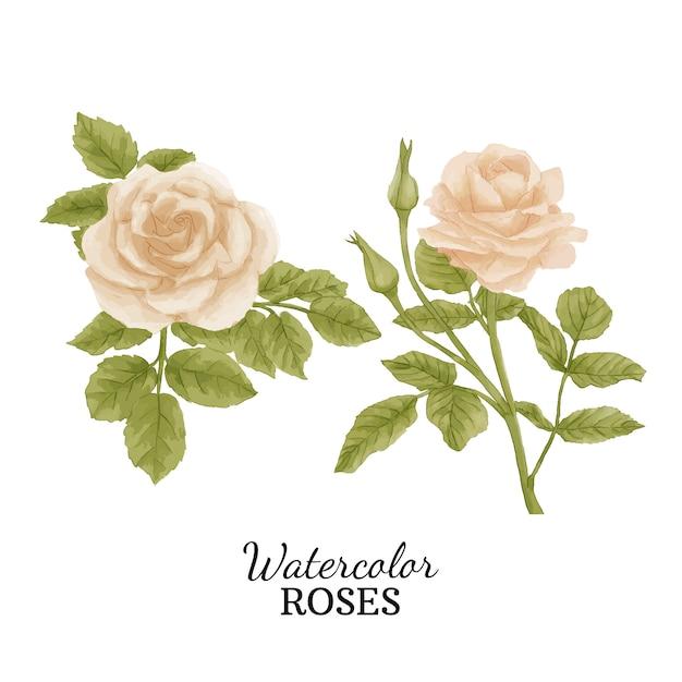 Watercolor roses Premium Vector