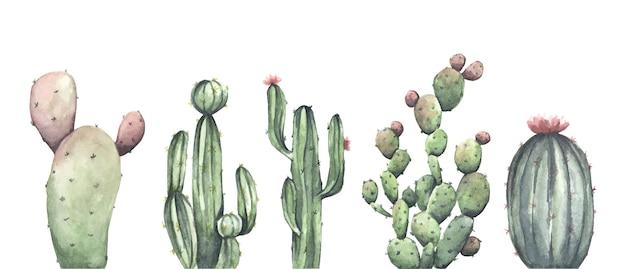 Акварельный набор кактусов на белом фоне. цветочная иллюстрация Premium векторы