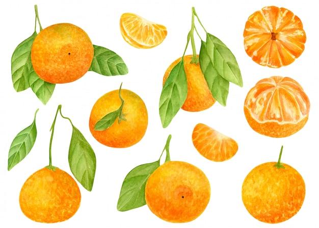 Акварельный набор сладких мандаринов с листьями Premium векторы