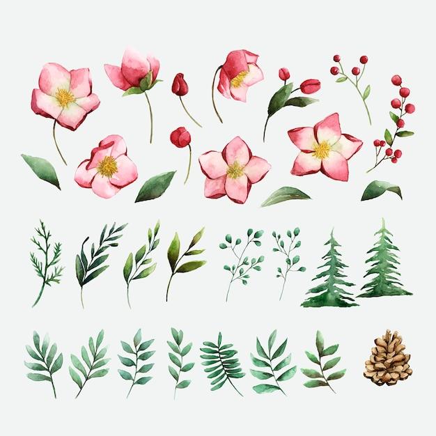 Акварельный набор зимних цветов и листьев вектор Бесплатные векторы