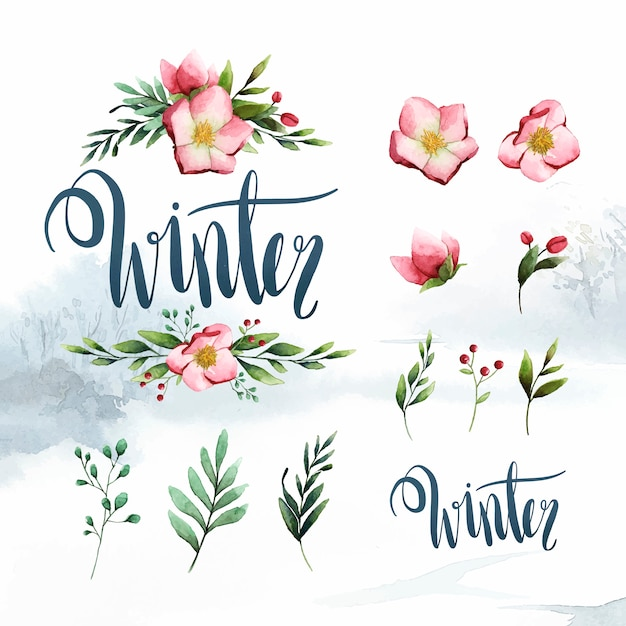 Watercolor set of winter flowers and leaves vector Free Vector