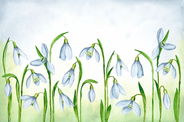 Watercolor spring background with snowdrops Free Vector