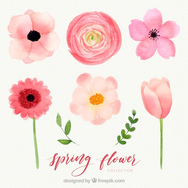 Watercolor Spring Flower Collection Vector Free Download