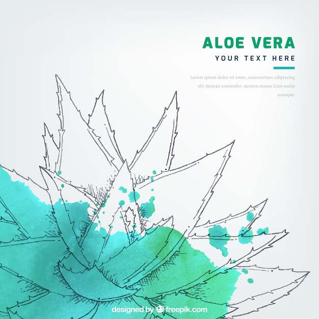 Watercolor stain background with aloe vera sketch Free Vector