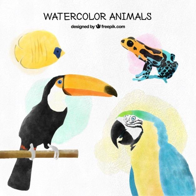 Watercolor tropical birds and other exotic\ animals set