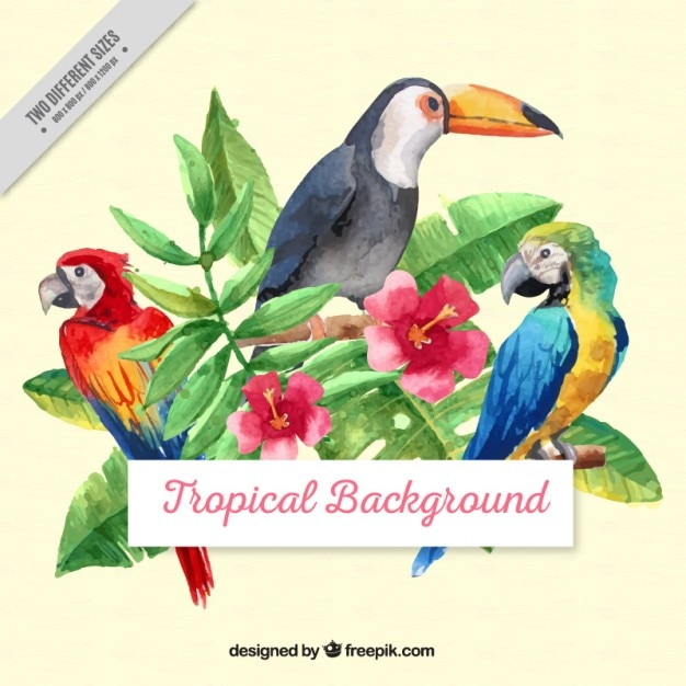 Watercolor tropical birds with leaves\ background
