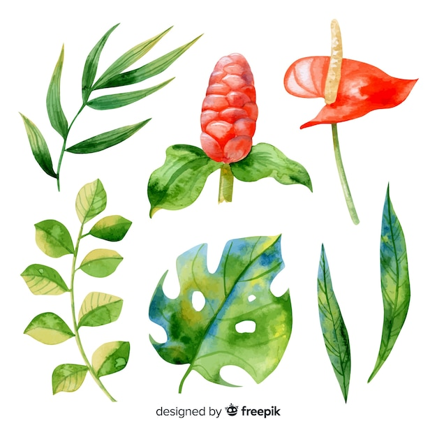 Watercolor tropical flowers and leaves Free Vector