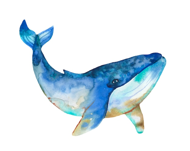 Акварельный кит с абстрактным всплеском. Premium векторы