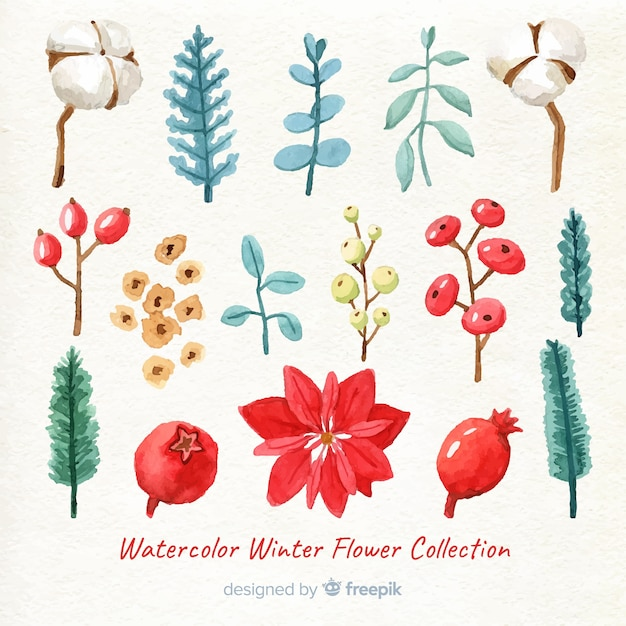 Watercolor winter flower collection Free Vector