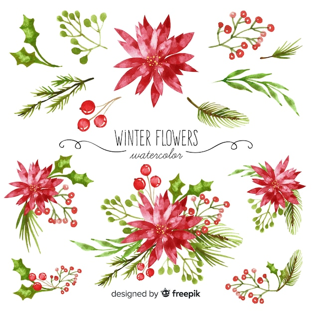 Watercolor winter flower collection Vector | Free Download