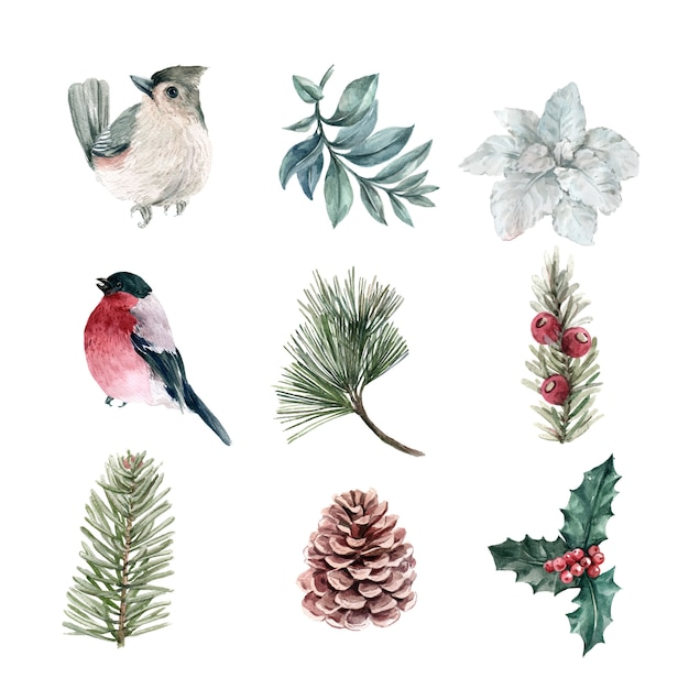 Watercolor winter plants and bird collection Free Vector