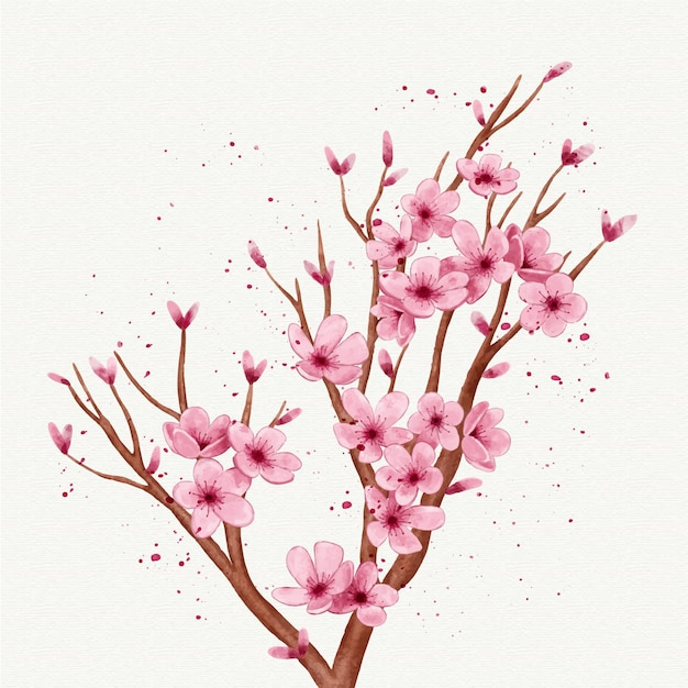 Watercolour branch of sakura flower Free Vector