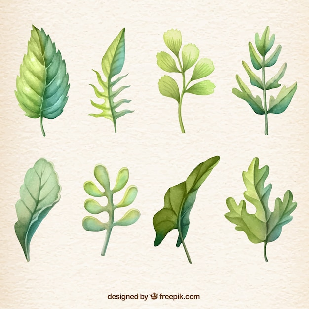 Watercolour leaf collection Free Vector