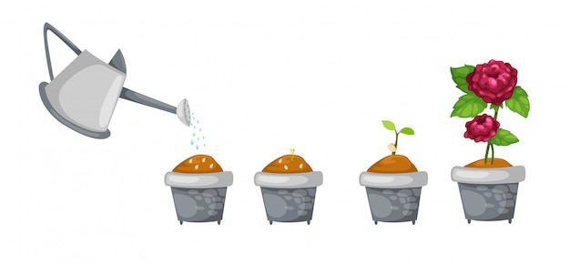 Watering can with rose life cycle vector Premium Vector