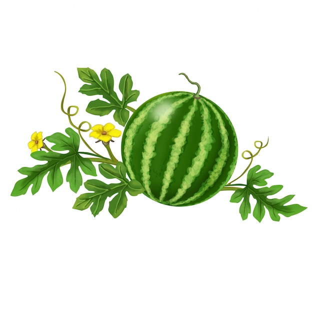 Watermelon with flowers Premium Vector