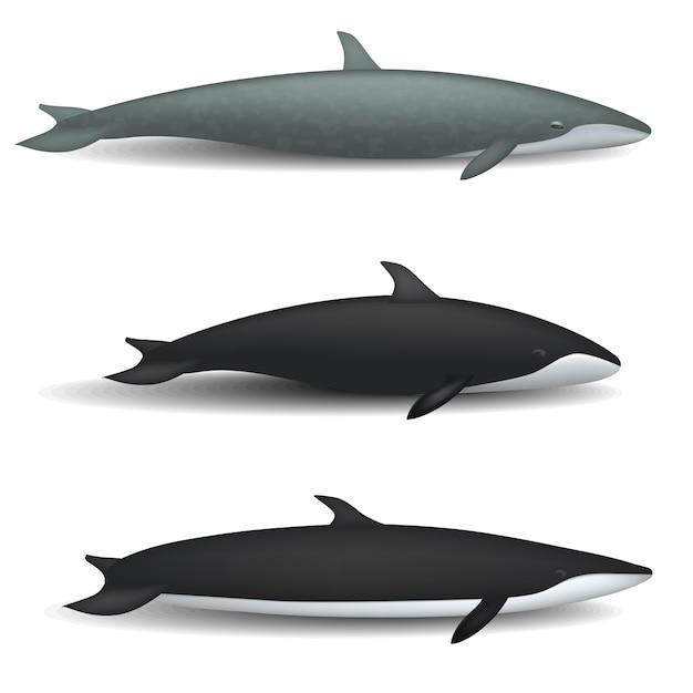 クジラの青い物語魚モックアップセット。 webの3クジラ青い物語魚モックアップのリアルなイラスト Premiumベクター