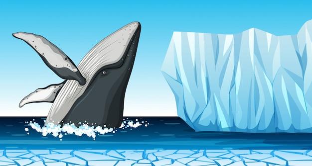 A whale in antarctica Premium Vector