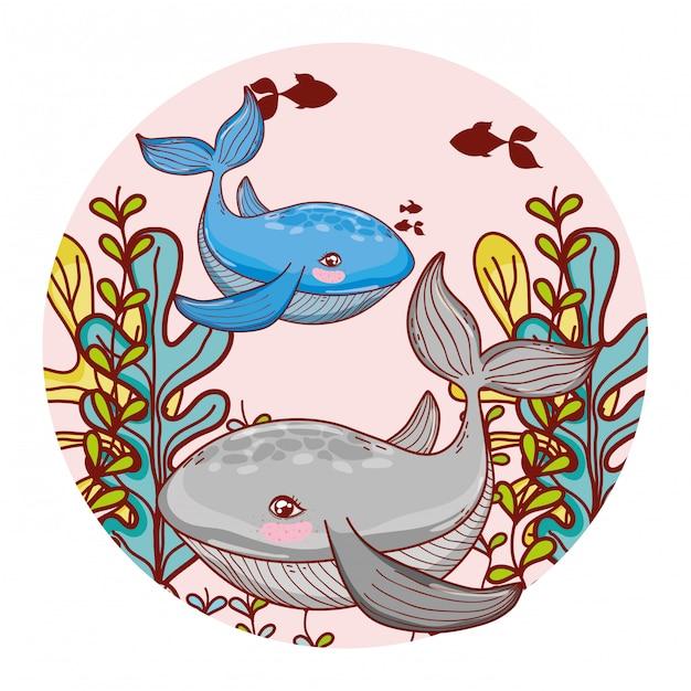Whale couple animal with seaweed plants Premium Vector