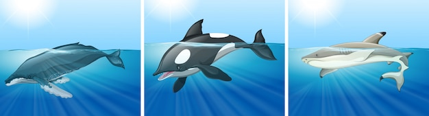 Whale and shark in the ocean Free Vector