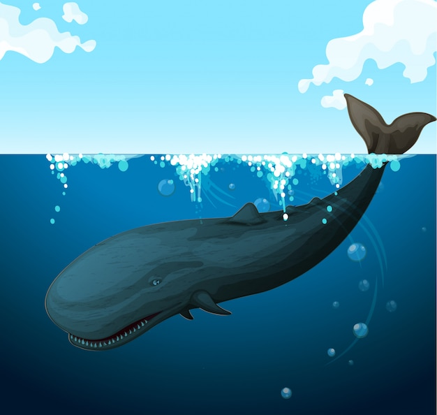 Whale swimming under the sea Free Vector