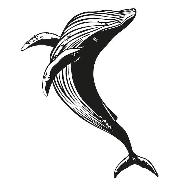 Whale vector hand drawn illustration. Premium Vector