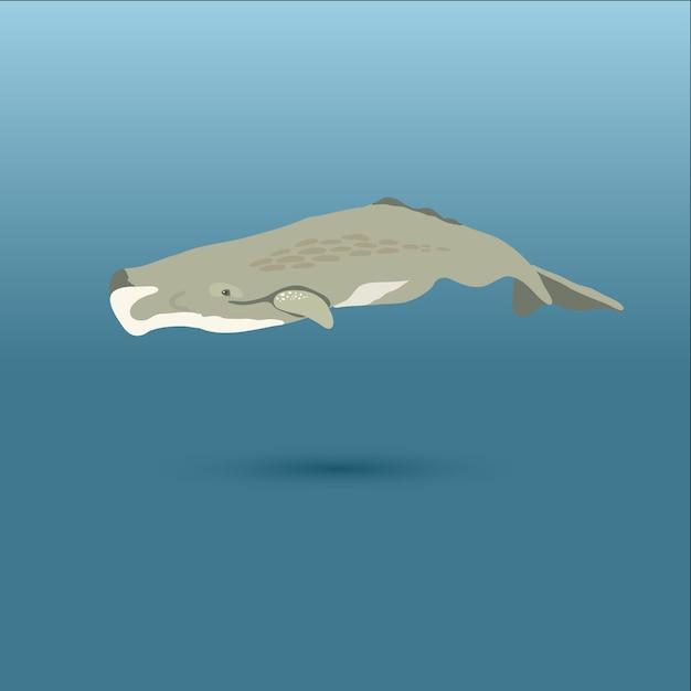 Киты со всего мира / killer orca / пигмейская сперма, bowhead, pygmy right, пилот с длинными плавниками Premium векторы